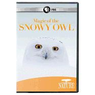 DVD: Magic of the Snowy Owl