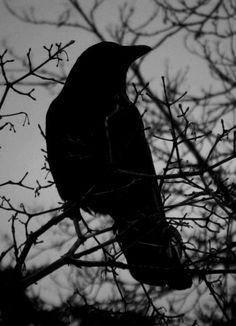 Elegy for a dream Quoth The Raven, Raven Bird, Moonlight Photography, Dark Photography, Dark Castle, Arte Obscura, Crows Ravens, Fantasy Castle, Goth Art