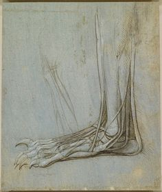 A study of the dissection of the lower leg and foot of a bear, viewed in profile to the left. To the left there is also a slight drawing of the leg.  Royal Collection © Her Majesty Queen Elizabeth II - from A Rare Glimpse of Leonardo da Vinci's Anatomical Drawings  http://www.brainpickings.org/index.php/2012/07/17/leonardo-da-vinci-anatomist/#
