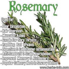 Medical Herb of the Day: Rosemary - stimulates and strengthens the circulatory and nervous systems and is widely approved for treating flatulence, satiety, minor gastrointestinal cramps and low blood pressure. It contains chemicals which have astringent, anti-flatulent and sweat-inducing Properties. The essential oil is antagonistic to the presence of calcium, which makes it a smooth-muscle relaxant, as well as having antioxidant, antiseptic and antimicrobial Properties. Continue reading ...