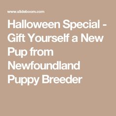Halloween Special - Gift Yourself a New Pup from Newfoundland Puppy Breeder