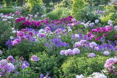Billedresultat for staudebed pæon English Flower Garden, English Garden Design, Flower Garden Design, English Gardens, Landscaping Tips, Garden Landscaping, Home And Garden Store, Blue And Purple Flowers, Flower Landscape