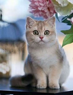 Image about photography in Cats/Kittens by Alyson Townsend Cute Cats And Kittens, I Love Cats, Crazy Cats, Cool Cats, Kittens Cutest, Pretty Cats, Beautiful Cats, Cat Crying, Tier Fotos