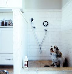 Dog washing station in a mud room