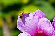 Available in prints, framed prints, canvas prints, acrylic prints, metal prints, greeting cards.