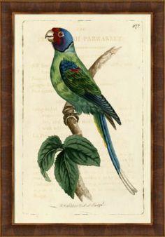 Accessories, Tropical Birds Framed Art II, Accessories | Havertys Furniture
