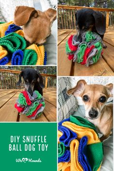 Homemade Dog Toys, Diy Dog Toys, Puppies And Kitties, Toy Puppies, Boy Dog Clothes, Brain Games For Dogs, Dog Enrichment, Interactive Dog Toys, Dog Crafts