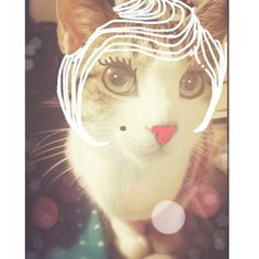 enter image description here Crazy Cat Lady, Crazy Cats, Kitten Mittens, Instagram Artist, Sleepy Cat, Photography Editing, I Love Cats, Hello Kitty, Dog Cat