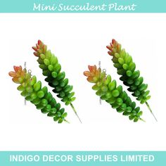 Find More Decorative Flowers & Wreaths Information about 10pcs Mini Wheat Sprays Artificial Succulent Plant Plastic Green Flower  Table Decoration Free Shipping,High Quality wheat manufacturer,China decor Suppliers, Cheap wheat straw for sale from Indigo Decor Supplies Limited on Aliexpress.com