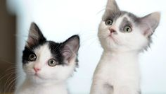 kittens Strawberry and Shortcake...