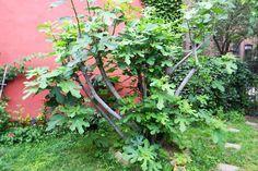 أفضل الأشجار لمصنع | الأشجار من أجل المناظر الطبيعية | نصائح HouseLogic يارد