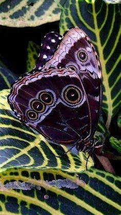 34Butterflies And Moths