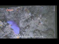 Rare coral FOUND at marine canyons off