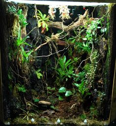 Rainforest terrarium - dark forest floor with lots of vines and hanging plants, including Nepenthes.