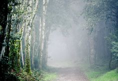 landscape print  forest surreal fog nature green tree by ZoiShop, $50.00