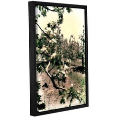 ArtWall Kevin Calkins Apple Blossoms Gallery-Wrapped Floater-Framed Canvas, Size: 24 x 36, Brown