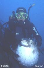 """Inflarse para vivir  En el mar pocas estrategias de defensa son tan completas como la del """"pez globo""""."""