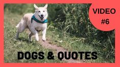 Cute Dog Videos [Video #6] With Motivational Quotes
