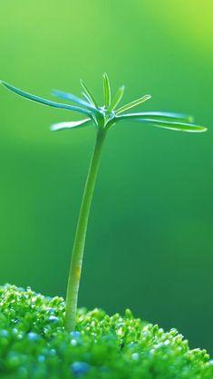 Nature Fresh Plant Bud Macro #iPhone #5s #wallpaper