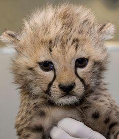 If you keep on petting me I'll tear you apart!!!
