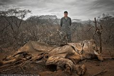 Shameful: Basketball star Yao Ming comes face-to-face with a poached elephant in Northern ...