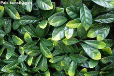 laurel artificial hedges 12 pcs.  50 x 50 cm = 3m2 = € 102,-