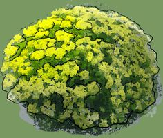 Cushion Spurge Puzzle, Garden Planning, Cushions, Plants, See Through, Throw Pillows, Puzzles, Toss Pillows, Riddles