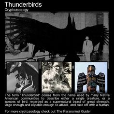 Thunderbirds. Is there any truth to stories of birds so large that they can take off with and kill a human being? Read more here:  http://www.theparanormalguide.com/blog/thunderbirds