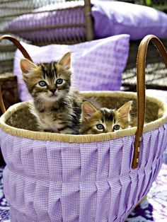 Cute kittens in a purple basket Cute Kittens, Cats And Kittens, Crazy Cat Lady, Crazy Cats, Color Splash, Gatos Cats, Here Kitty Kitty, Pet Names, Violet