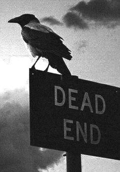 ja manchmal wünschte ich mir das Ende und meine Seele könnte davon schwebenwie die Krähe....