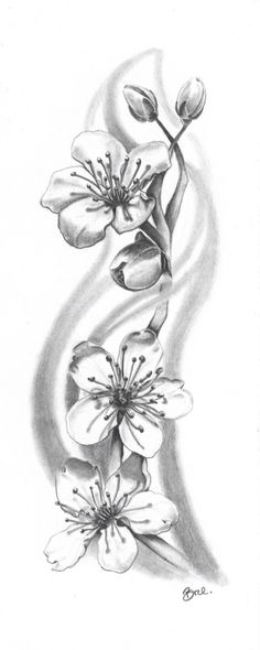 Black and gray cherry blossoms