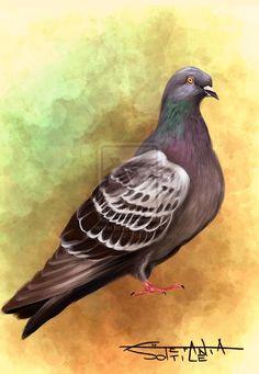 Pigeon by clockworkBAT on DeviantArt