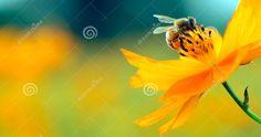 Perché gli insetti sono utili all'uomo? Gli insetti,contrariamente a quanto si pensa, sono utili all'uomo come organismi inseriti negli ecosistemi...