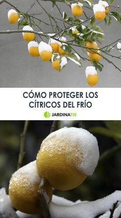 tienda limon citrico maturin