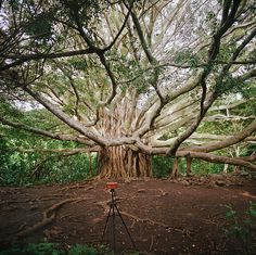 pinhole at work: maui, part two by manyfires,