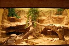 The Lifespan of a Bearded Dragon Depends on Proper Care Bearded Dragon Vivarium, Bearded Dragon Enclosure, Bearded Dragon Terrarium, Bearded Dragon Cage, Bearded Dragon Habitat, Terrarium Diy, Terrarium Reptile, Reptile Habitat, Reptile Room