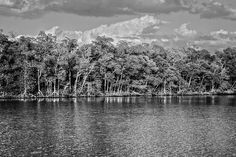 Everglades by Timothy Lowry.