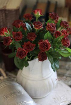 sp rose