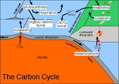 Carbon Cycle and the Earth's Climate Earth Science, Science And Nature, Carbon Cycle, Photosynthesis, Current Events, Climate Change, Politics, Ocean, Education
