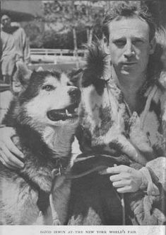 "Dave Irwin, artic explorer, with malamute at the New York's World Fair. The Hinman-Irwin dogs are referred to as ""the third strain""."