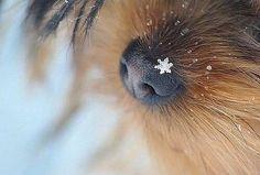Зима на носу