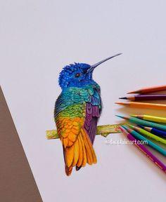 Beautiful Eye-Catching Colorful Wildlife Drawing by Sallyann Walker. |FunPalStudio|Illustrations, Entertainment, beautiful, Art, Artist, Artwork, nature, World, Creativity, drawings, paintings, wildlife art, birds drawing, colored pencil, Sallyann Walker.