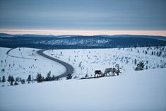 Lapland has accessible wilderness locations, wide-ranging road network and a national law called Everyman's Right make filming in the wilderness simple. Arctic, Wilderness, Mountains, Film, Nature, Travel, Movie, Movies, Naturaleza