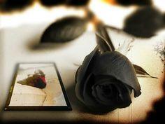 Black Roses Flowers Yuri Art Styles Gothic Wallpaper