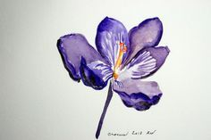 98c262b419cdb saffron crocus - tattoo inspiration Saffron Flower, Saffron Crocus,  Watercolor Sketch, Watercolor Flowers