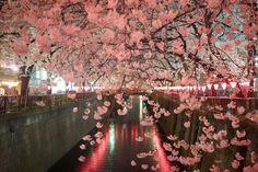 Meguro River, Fashion Flight: うっとり目黒川の夜桜!〜日本人が桜を愛する理由を聞かれたら〜