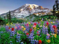 Washington State Mountains | Фотография пользователя Tanya, Мельбурн ...