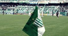 This is Banfield