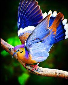 bird- pajarito de hermosos colores!