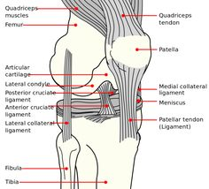 Pain to the undersurface of the patella is variously called anterior knee pain, chondromalacia patellae, patella malalignment syndrome and patellofemoral pain syndrome (PFPS).